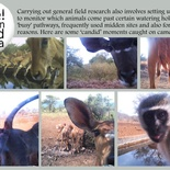 Funny camera trap images