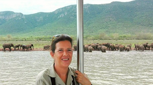 Elephants, water, lake, swimming, monitoring