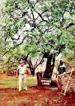 Patriarch, Kallie Kohrs at the original Umphafa tree (Buffalo Thorn) that was pushed over by an elephant.