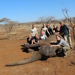 Elephant Research Dissertation student group