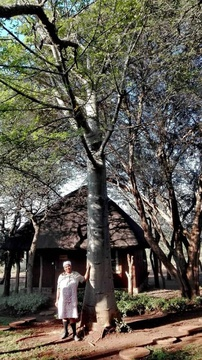 Litha Mathenjwa at the Bush Camp Baobab.  She has worked for White Elephant Safaris  for 30 years.