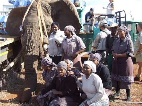 Staff at elephant vasectomies in 2008