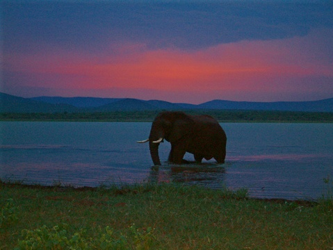 Elephant in Lake Jozini