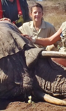 Heike during an elephant mobilization
