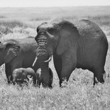 Curve and the twins with Orphan Herd - 20 Dec 2014